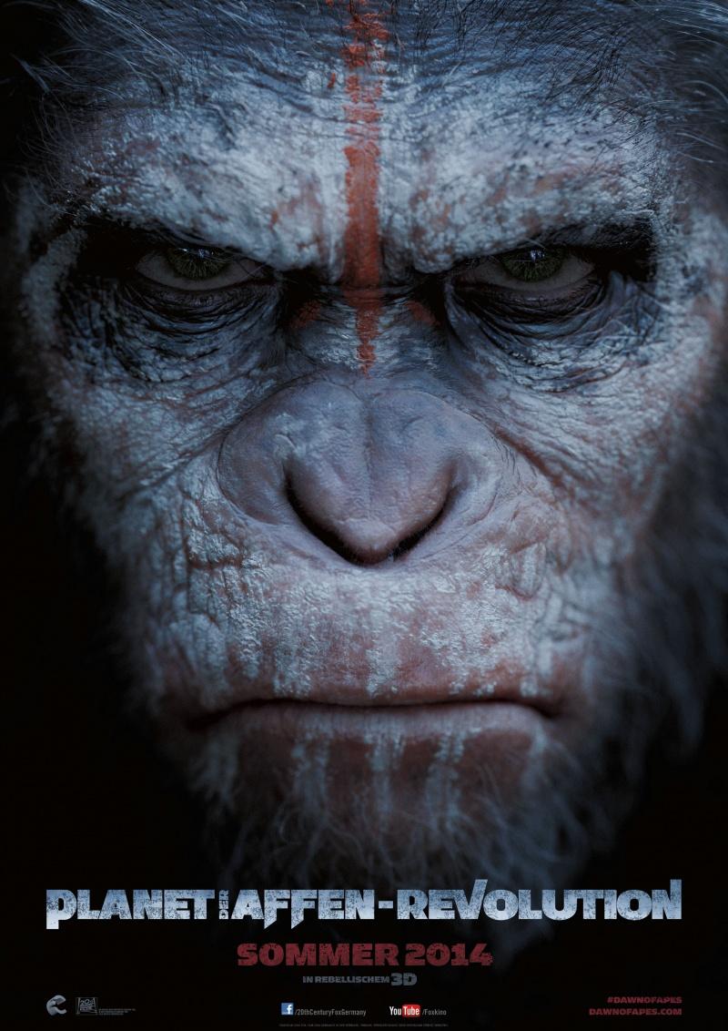 Смотреть фотографии обезьян любительское 11 фотография